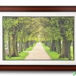 กรอบรูป ภาพต้นไม้ผลิใบ