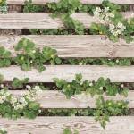 Wallpaper ลายไม้รั้วไม้สีขาว