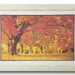 กรอบรูป ภาพใบไม้เหลืองส้ม ฤดูใบไม้ผลิ