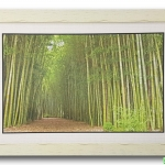 กรอบรูป ภาพทางเดินป่าไผ่