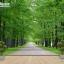 วอลเปเปอร์ติดผนังภาพวิว สวนสาธารณะแคตเทอรีน รัฐเซีย thumbnail 4